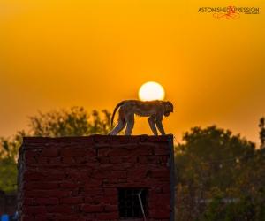 india sunset monkey