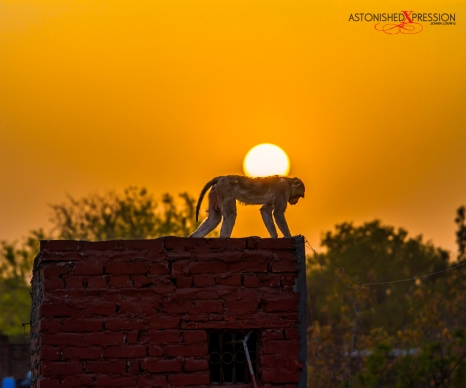 india sunset monkey