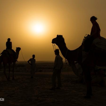 camel safari thar desert rajasthan india