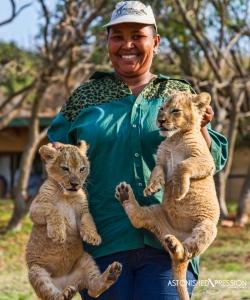 lion cubs africa image