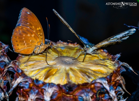 Changi Airport's butterfly garden